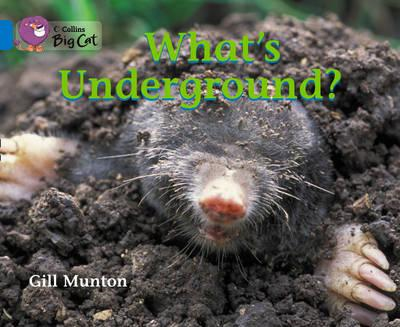 What's Underground? Workbook (BOK)