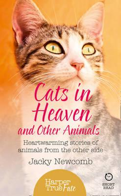 Cats in Heaven (BOK)