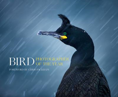Bird Photographer of the Year (BOK)