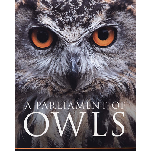 Parliament of Owls (BOK)