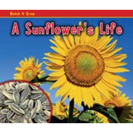 Sunflower's Life (BOK)