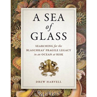Sea of Glass (BOK)