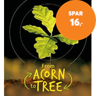 Produktbilde for Lifecycles - Acorn to Tree (BOK)