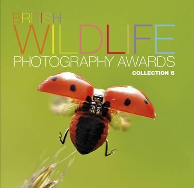 British Wildlife Photography Awards: Collection 6 (BOK)