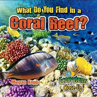 What Do You Find in a Coral Reef? (BOK)