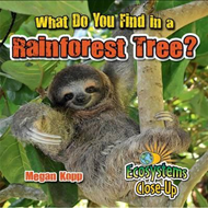 What Do You Find in a Rainforest Tree? (BOK)