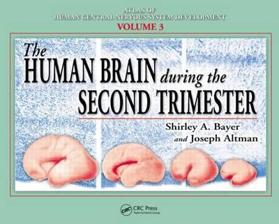 The Human Brain During the Second Trimester: v. 3 (BOK)