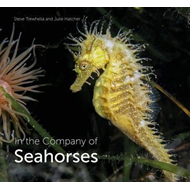 In the Company of Seahorses (BOK)