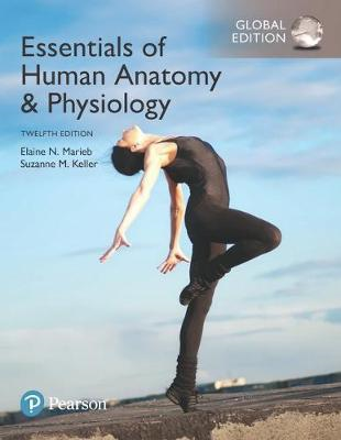 Essentials of Human Anatomy & Physiology, Global Edition (BOK)