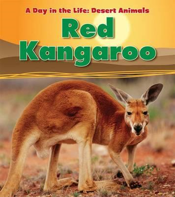 Red Kangaroo (BOK)
