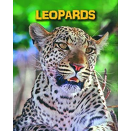 Leopards (BOK)