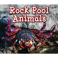 Rock Pool Animals (BOK)