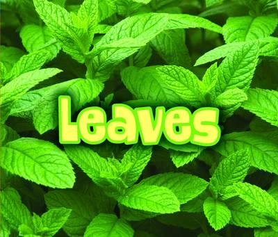 All About Leaves (BOK)