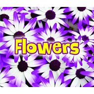 All About Flowers (BOK)