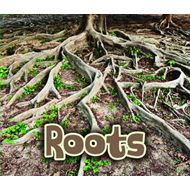 All About Roots (BOK)