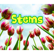 All About Stems (BOK)