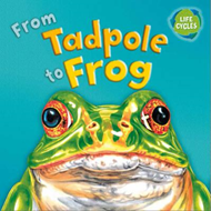 From Tadpole to Frog (BOK)