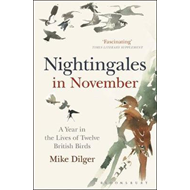 Nightingales in November (BOK)