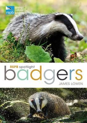 RSPB Spotlight: Badgers (BOK)