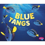 Regal Tangs (BOK)