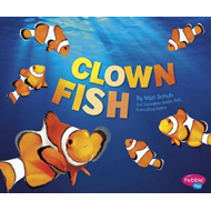 Clown Fish (BOK)
