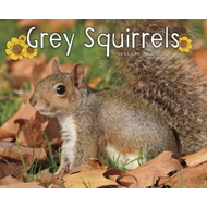 Grey Squirrels (BOK)