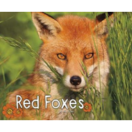 Red Foxes (BOK)