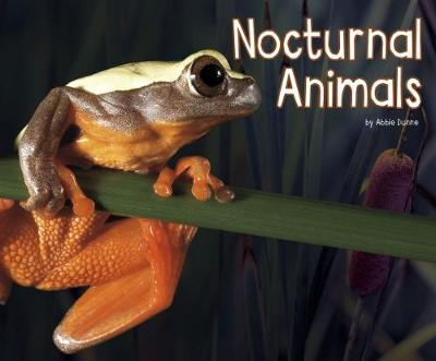 Nocturnal Animals (BOK)