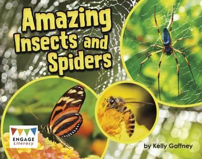 Amazing Insects and Spiders (BOK)