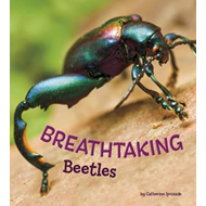 Breathtaking Beetles (BOK)