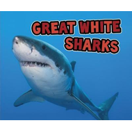 Great White Sharks (BOK)