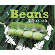 Bean's Life Cycle (BOK)