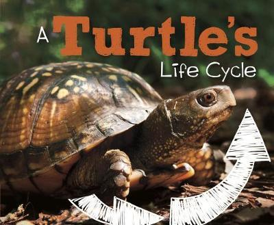Turtle's Life Cycle (BOK)