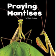 Praying Mantises (BOK)
