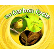 Carbon Cycle (BOK)