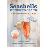 Seashells of New England (BOK)