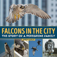 Falcons in the City (BOK)