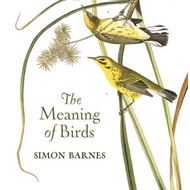Meaning of Birds (BOK)