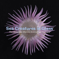 Sea Creatures in Glass (BOK)