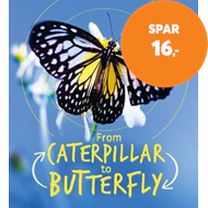 Produktbilde for Lifecycles: Caterpillar to Butterfly (BOK)