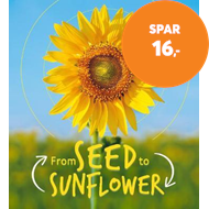 Produktbilde for Lifecycles: Seed to Sunflower (BOK)