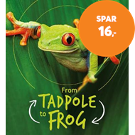 Produktbilde for Lifecycles: Tadpole to Frog (BOK)