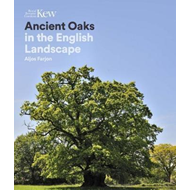 Produktbilde for Ancient Oaks - In the English landscape (BOK)