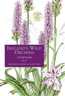 Ireland's Wild Orchids: A Field Guide (BOK)