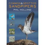 Common and Spotted Sandpipers (BOK)