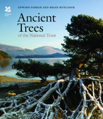 Ancient Trees of the National Trust (BOK)