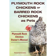 Plymouth Rock Chickens or Barred Rock Chickens as Pets. Plym (BOK)
