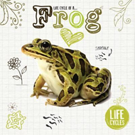 Life Cycle of a Frog (BOK)