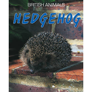Hedgehog (BOK)