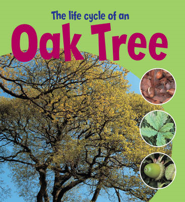 Life Cycle of an Oak Tree (BOK)